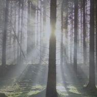 Wald-fertig-tapeziert
